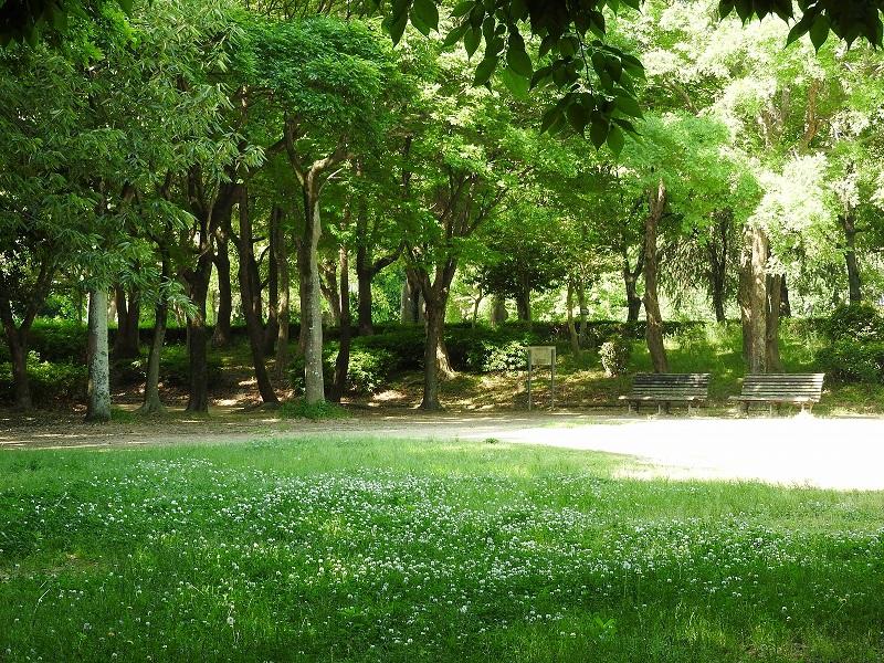 クローバーの森